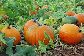 October 31st:  Harvest Party and Trunk or Treat!